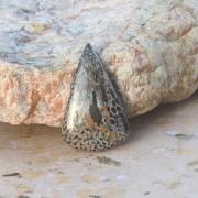 Svart Fossil Jaspis Coral sten cab 35x22mm