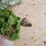 Golden Tiger moss Agat sten 30x24mm