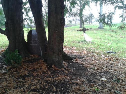 """Gamla gravar med dolda hemligheter. Här är en inklämd sten mellan träden med endast """"MOR"""" som inskription."""