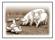 Bild 3_Höns och grisar - sepia
