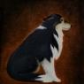 "Olja - Vår hund ""Mommen"""