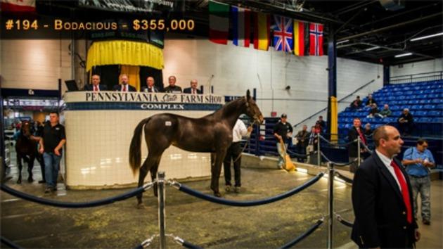 bild från auktionen i USA (inte vår häst på bilden)