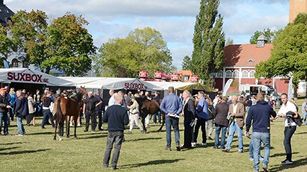 Wenngarn Yearling Sales