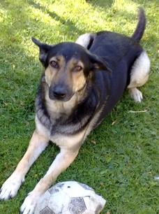 Hårmineralanalys hund - Hårmineralanalys hund