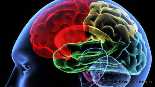 fett i hjärnan