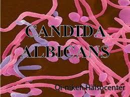 candida9