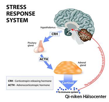 stress och stresshantering