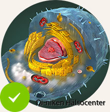 D3 Ensure_Healthy_Cellular_Function