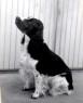 Hårmineralanalys hund