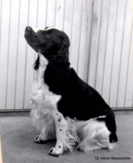 1962 Cockie 2
