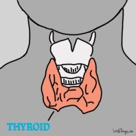Complete Iodine Thyroid w/ elements
