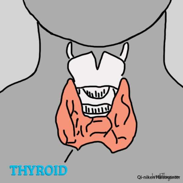 thyroid-600x600