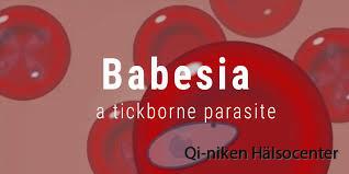 babesia3