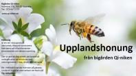 Honung 700g ekologisk