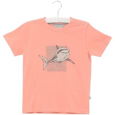 Wheat T-shirt Shark - Wheat T-shirt Shark ( Storlek 4 år 9