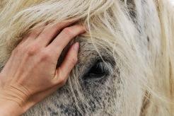 Hippofysen referenser friskvård för häst förebygg skador