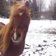 Snáði vinter 2013 i Klyvjan Foto; Spire Ohlsson
