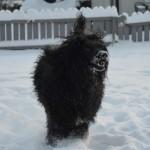 Snötrollet
