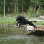 Hopp i vattnet