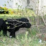 Vår lilla trädgårdsmästare