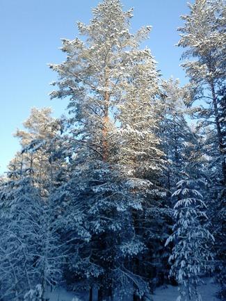 En bild från tidigare dag i skogen...