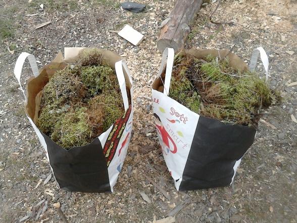 Vi tänkte täta en del springor med mossa, två kassar räckte rätt långt men var inte tillräckligt. De större springorna kommer vi täta med lister eller brädbitar.