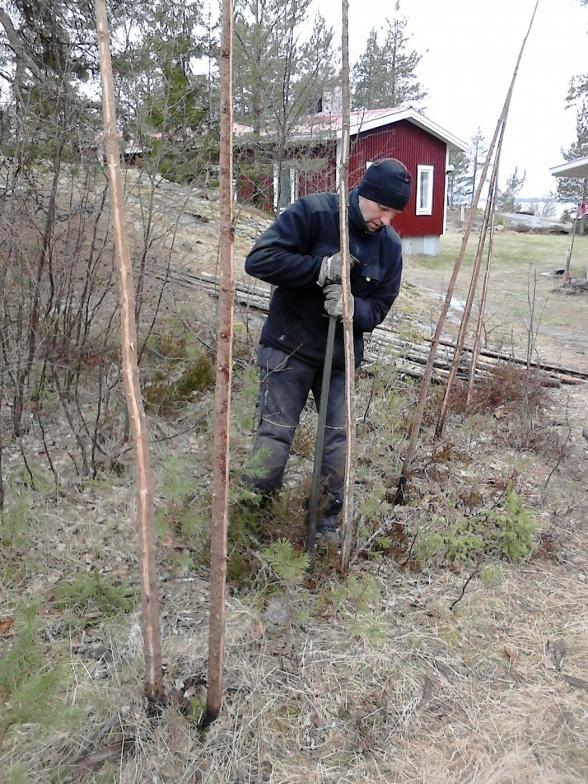Ola spättar nya hål för nya störar. Sen återanvände vi de gamla slanorna eftersom de var i gott skick.