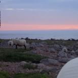Grillafton vid Hallandskusten - en populär aktivitet och nära till Stakaberg Gårdshotell utanför Halmstad