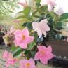Flower de Rilly