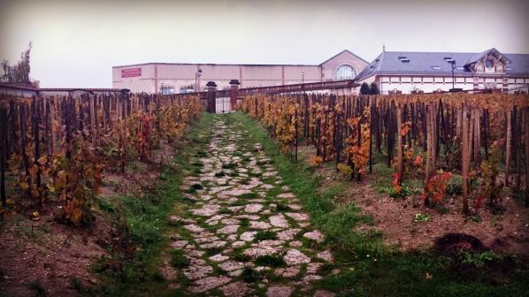 De gamla vinstockarna
