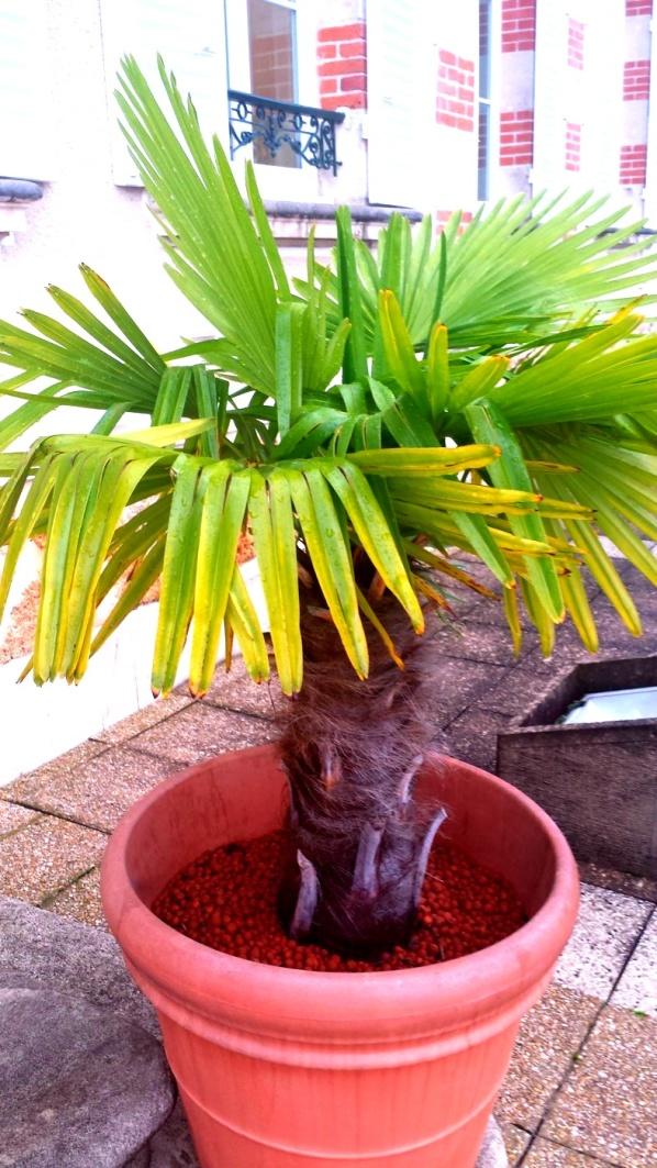 Palmen ser lite trött ut...för lite skumpa månne?