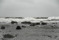 Abbekås hamn hamn 2008-10-2