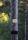 Elstolpen vid manöverbanan 2012-07-1