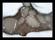 Byske havsbad 170122 (11)-pass