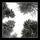Promenad i svampskogen 170220-0677-pass