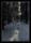 Promenad i svampskogen 170220-0688-pass