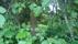 Tät vegetation mot Ljungstorspvägen