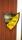 Soldattorpets sköld med Regemente och kompani