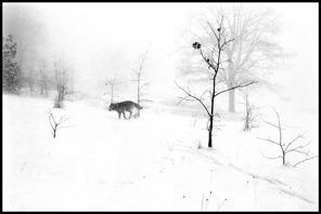 John Bauguess Copyright 1978 - med publiceringsrätt från fotograf. I frihet - ej Sverige. Klicka på bilden för att se den större!
