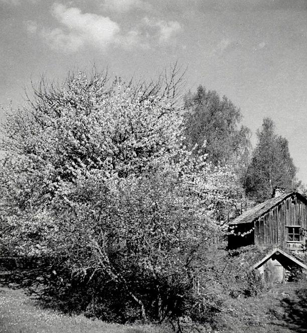 Från Backa gårds arkivalbum - Carl Arvid Tell, Backa gård 2013