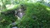Jordkällaren idag väl inbäddad i grönska