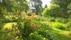Carslberg från västra trädgårdssidan med bärodling