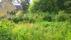 Vallmon blommar i trädgårdslanden