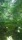 Grönskan närmar sig från alla håll
