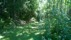 Allt djupare in i skogsmarkerna