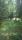 Sköna skogsängar