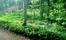 Grönskande örtrika marker