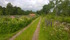 Utsikt längs med sommastrugevägen västerut