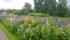Trädgårdsängen
