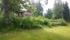 Från trädgården